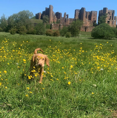 Kenilworth Castle - Dog walk