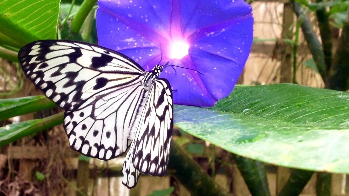 Stratford Butterfly Farm-076725-edited
