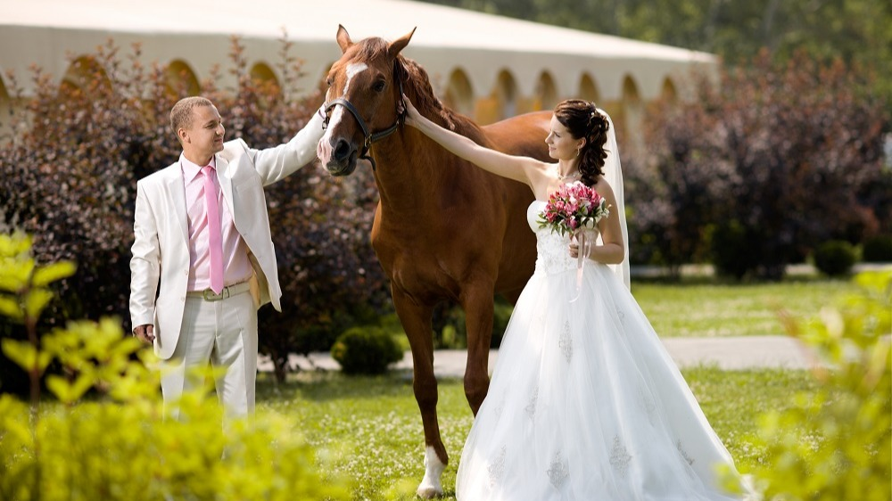 WEB Horse at Wedding-1