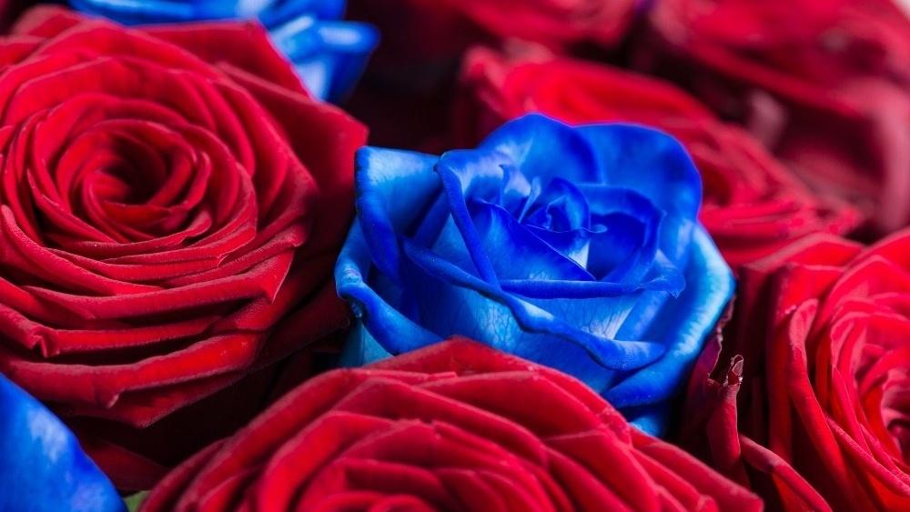 WEB British roses-477810-edited